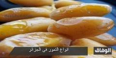 انواع التمور في الجزائر