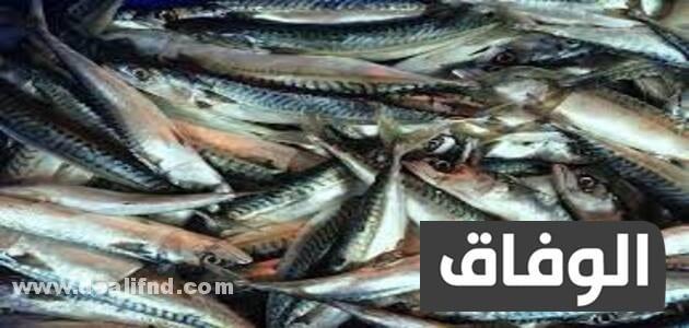 انواع السمك في الجزائر