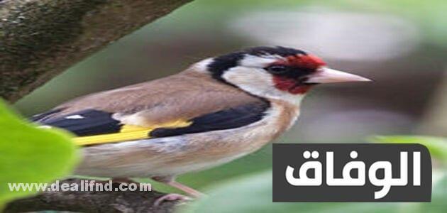 انواع الطيور في الجزائر