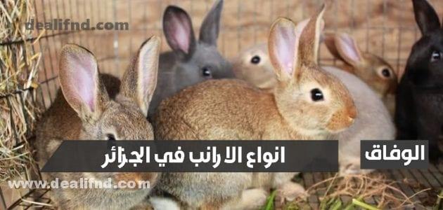 انواع الارانب في الجزائر