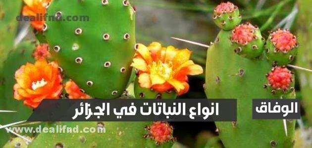 انواع النباتات في الجزائر
